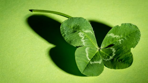 four leaf clover on green background