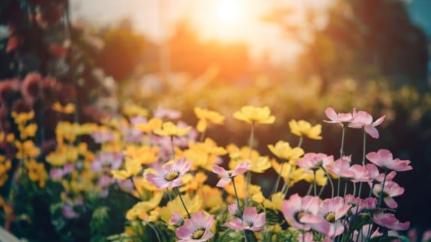 background-beautiful-beauty-bloom-158636