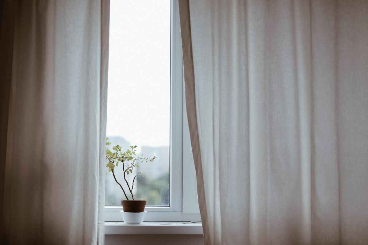 hospital window with curtains and plant on sil